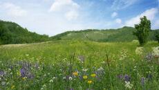 Europejskie łąki bogate jak lasy deszczowe
