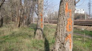 Kolejarze szykują remont. Wykarczują setki drzew