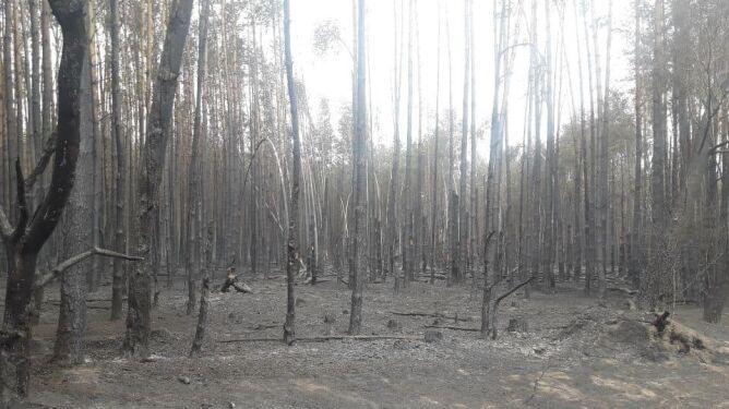 Największy pożary w 2019 roku w Polsce wybuchł w Opocznie